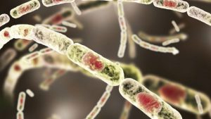 şarbon mikrobu
