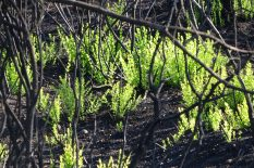 Felaketin rengi siyah, yağışlarının ardından yerini yeşile bırakıyor